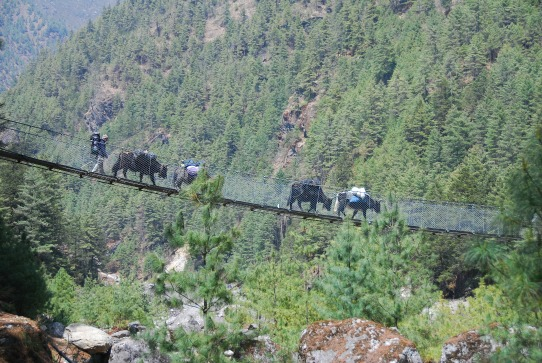 one of the many swing bridges along the trek.  The yaks didn't seem to mind the see-through floor but you certainly wouldn't want to be caught in front of them =)
